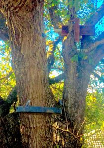 A Cheese Tree with a Bird Bath and Nestbox for attracting birds