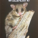 Cover of The Guide to Tasmanian Wildlife with an image of Eastern Pygmy-Possum