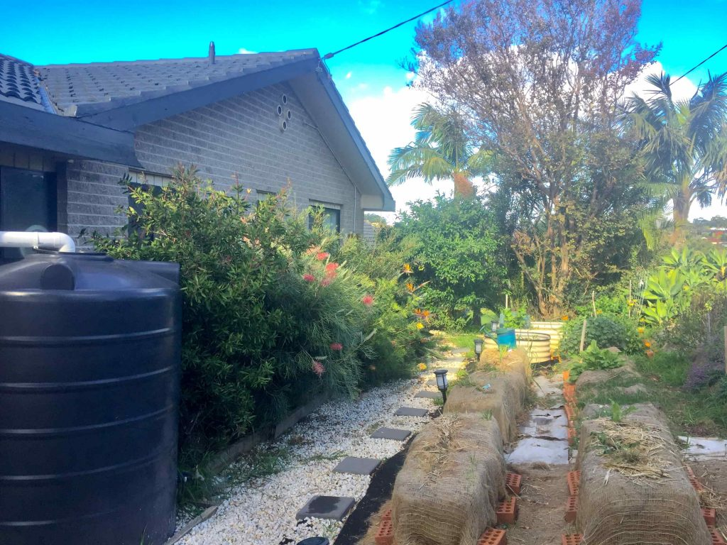 An Urban Garden with Native Plants for attracting birds