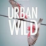 Cover of Australian Geographic's book 'Urban Wild' featuring a pair of galahs on a power line